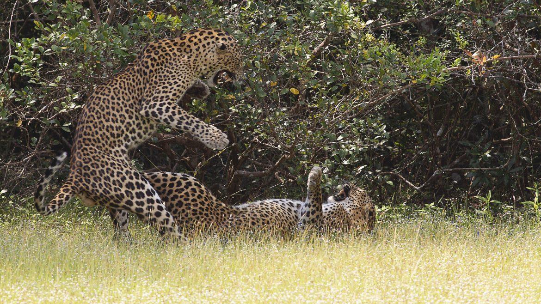 Yala National Park